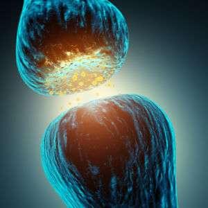 La sinapsi