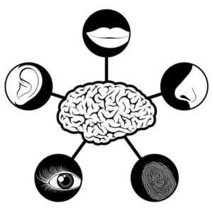Modalità sensoriale preferita
