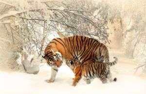 Tigre con il suo cucciolo