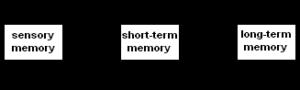 Modello Memoria Multimagazzino